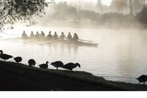 Photo of geese standing on the edge of the River Thames, with a rowing boat in the background