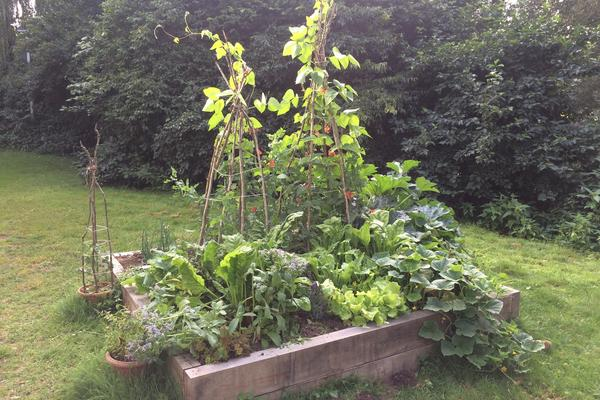 Photo of vegetable planter at Osney One