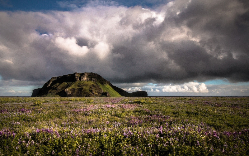 Purple flowers against a grassy mound